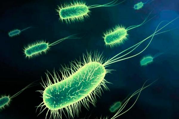 Микроорганизм Уреаплазма