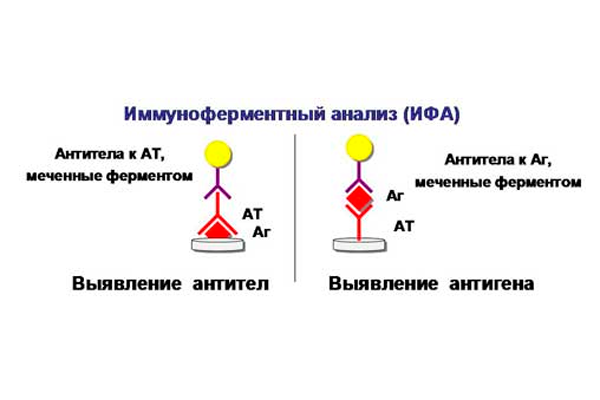 Принцип анализа ИФА