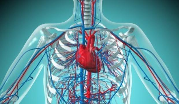 Поражения кровеносной системы