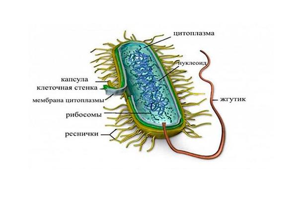 Развитие гидросальпинкса из-за инфекции микоплазмоза