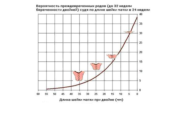 График изменения длины шейки матки при беременности двойней