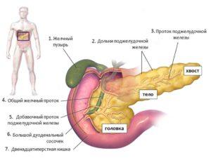 поджелудочная железа симптомы и лечение