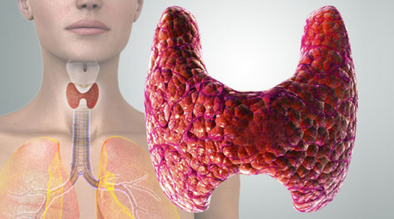 Влияниет на щитовидную железу