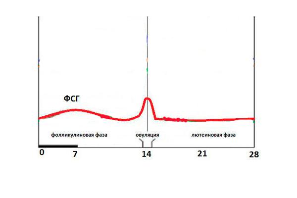 Изменения концентрации гормона ФСГ в менструальном цикле