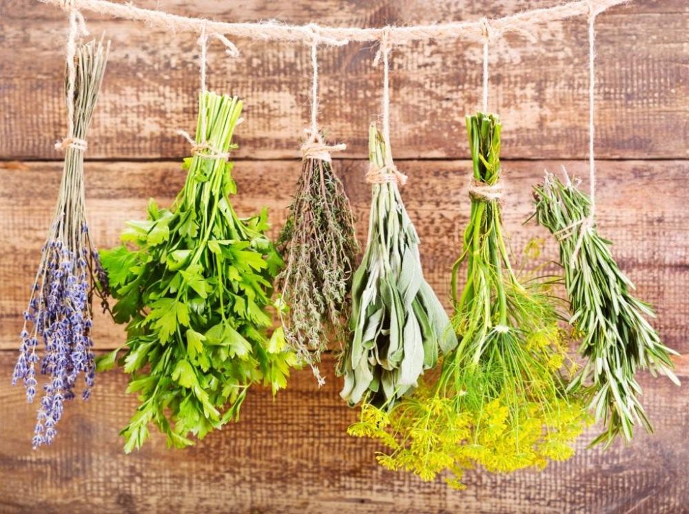 Какие травы собирают в августе для чая и лечения