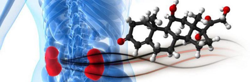 Функции кортизола
