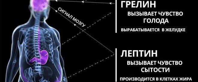 Гормон грелин и лептин