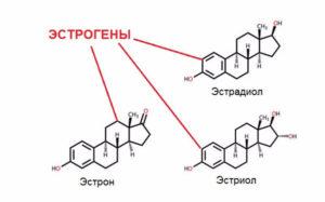 эстроген (о гормоне)