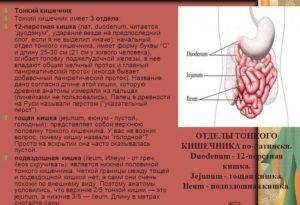 Виды заболеваний тонкого кишечника