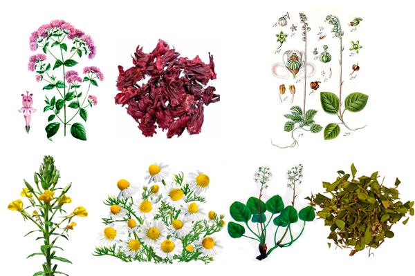 Состав растений входящих в сбор Матрены