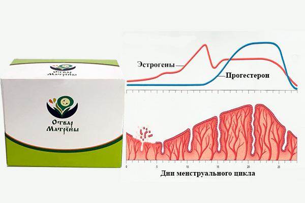 Нормализация менструального цикла и гормонального фона от трав Матрены