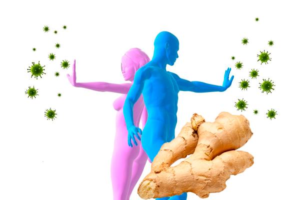 Укрепление иммунитета имбирным корнем
