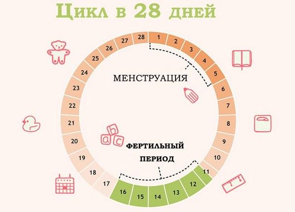таблица цикла