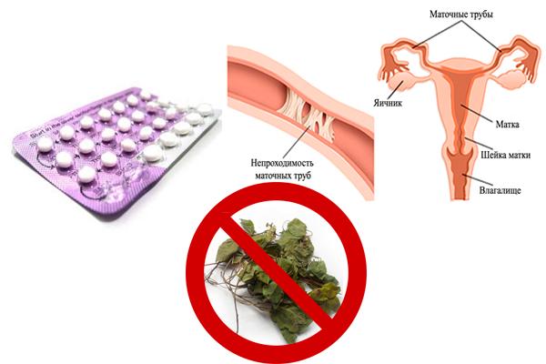 Запрет на употребления Боровой матки при непроходимости труб и применении оральных контрацептивов