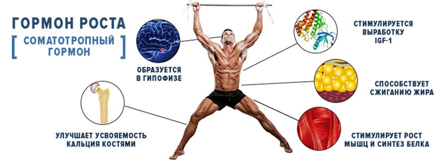 методы повышения выработки гормона роста