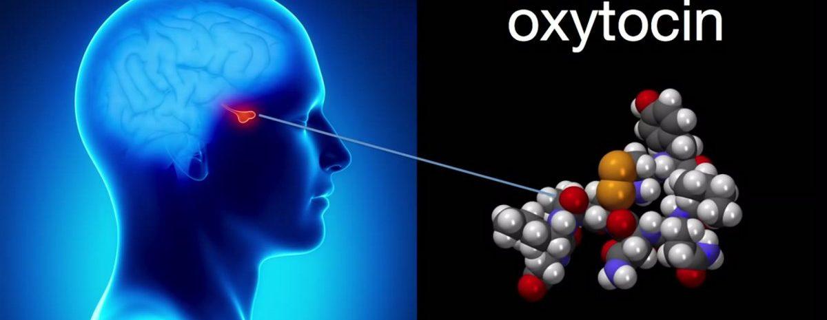 окситоцин влияние на организм