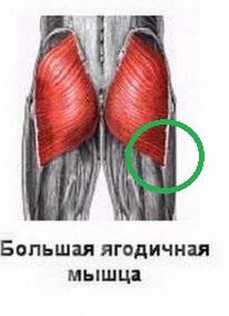 Попа полочкой: как сделать ее круглой и убрать впадины по бокам? Средняя ягодичная мышца