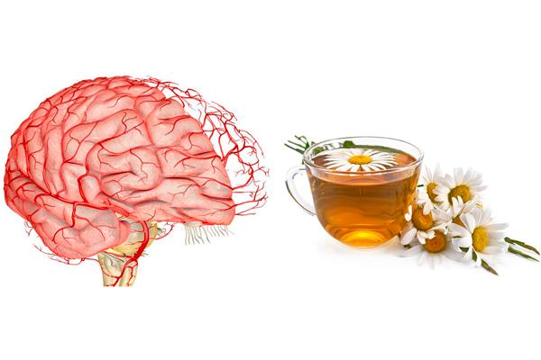 Активизация мозгового кровообращения при приема чая из ромашки