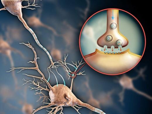 Серотониновый синдром обнаружен