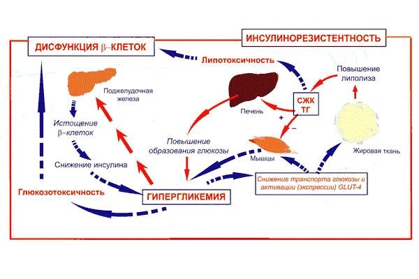 Сахарный диабет второго типа, как причина повышенного уровня гормона ФСГ