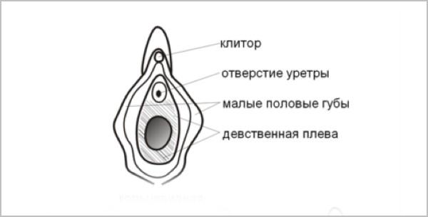 иллюстрация гимена у девочки