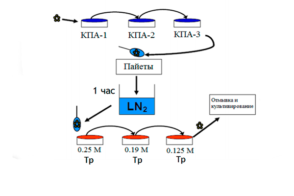 Схема проведение витрификации ооцитов