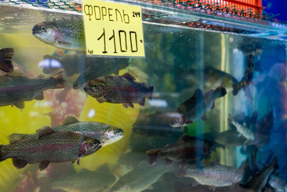 какой сорт рыбы покупать
