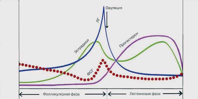 лютеинизирующий гормон норма