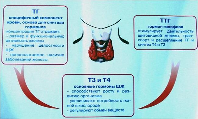 Субклинический гипотиреоз