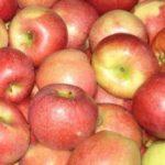 Яблоки сладкие