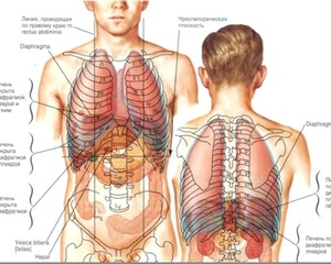 Несимметричность организма человека