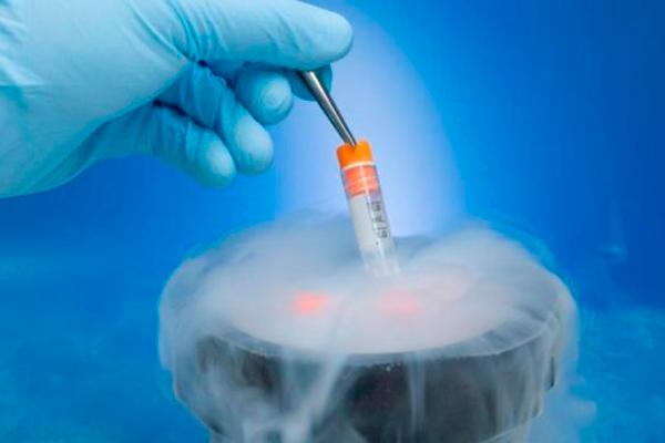 Замораживание эмбрионов перед ЭКО