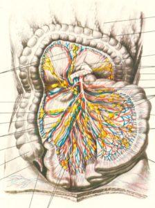 Сосудистые болезни