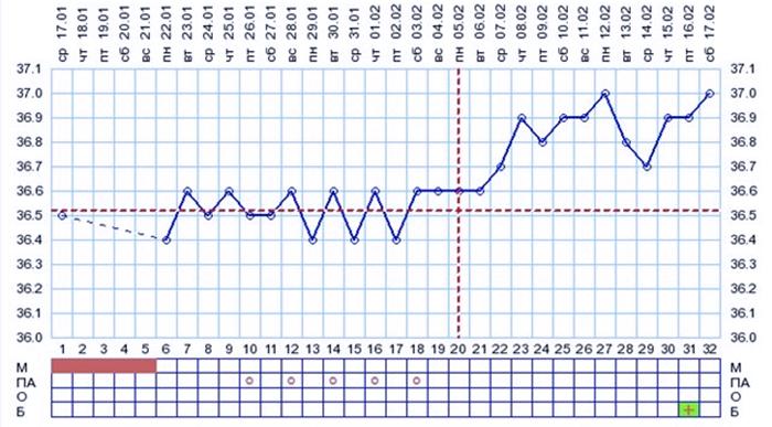 График базальной температуры после переноса эмбрионов при ЭКО