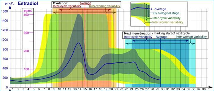 график количества эстрадиола