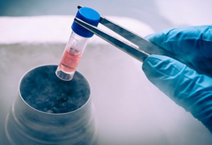 Капсула с эмбрионами перед заморозкой
