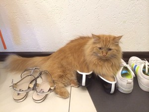 Кот гадит в обувь