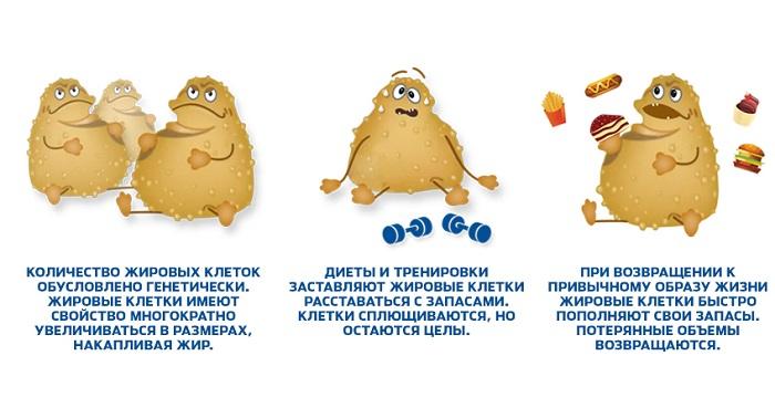куда девается жир, куда уходит жир при похудении, куда уходит жир когда мы худеем, как человек худеет куда уходит жир