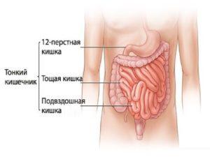 заболевания тонкого кишечника симптомы и признаки болезни