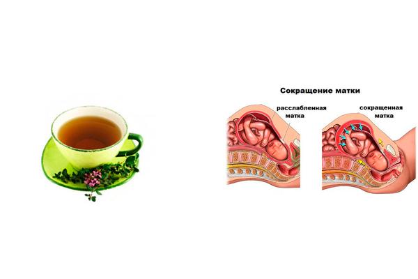 Возможный тонус матки в следствии употребления чая с чабрецом на позднем сроке беременности
