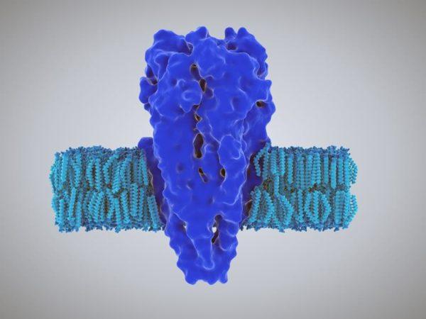 Никотиновые рецепторы