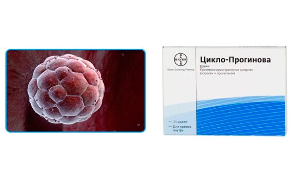 Влияние препарата Пргинова на успешное закрепление бластоцисты на эндометрии