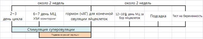протокол эко по дням подробно