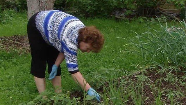 9 советов, как сберечь здоровье дачнику-гипертонику: как не заработать инсульт при сборе урожая?