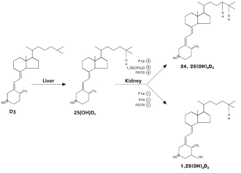 Паратиреоидный гормон биологическое вещество