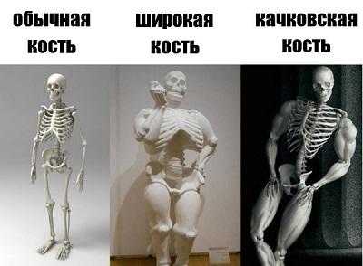 Широкая и тяжелая кость: миф или реальность?
