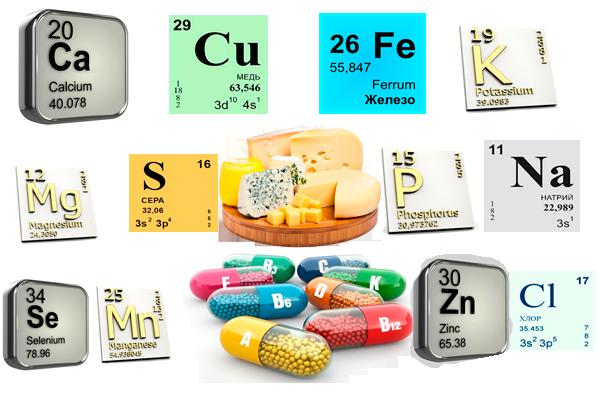 Полезные компоненты в составе сыра
