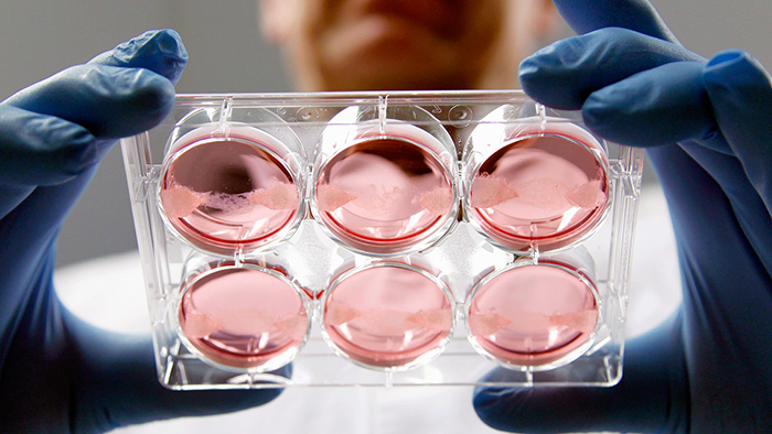 Эмбрионы ЭКО